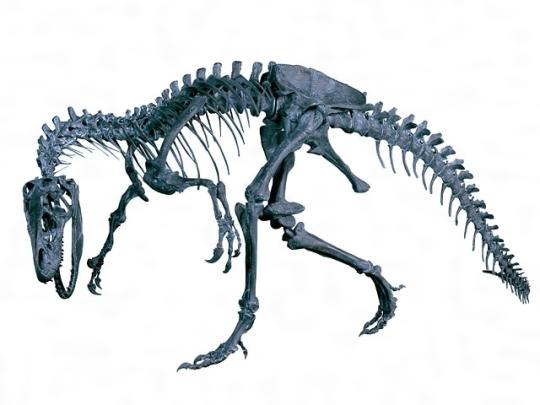 アロサウルスの骨格[百科マルチメディア]