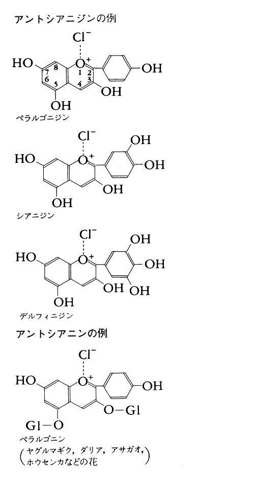 アントシアニジンの例
