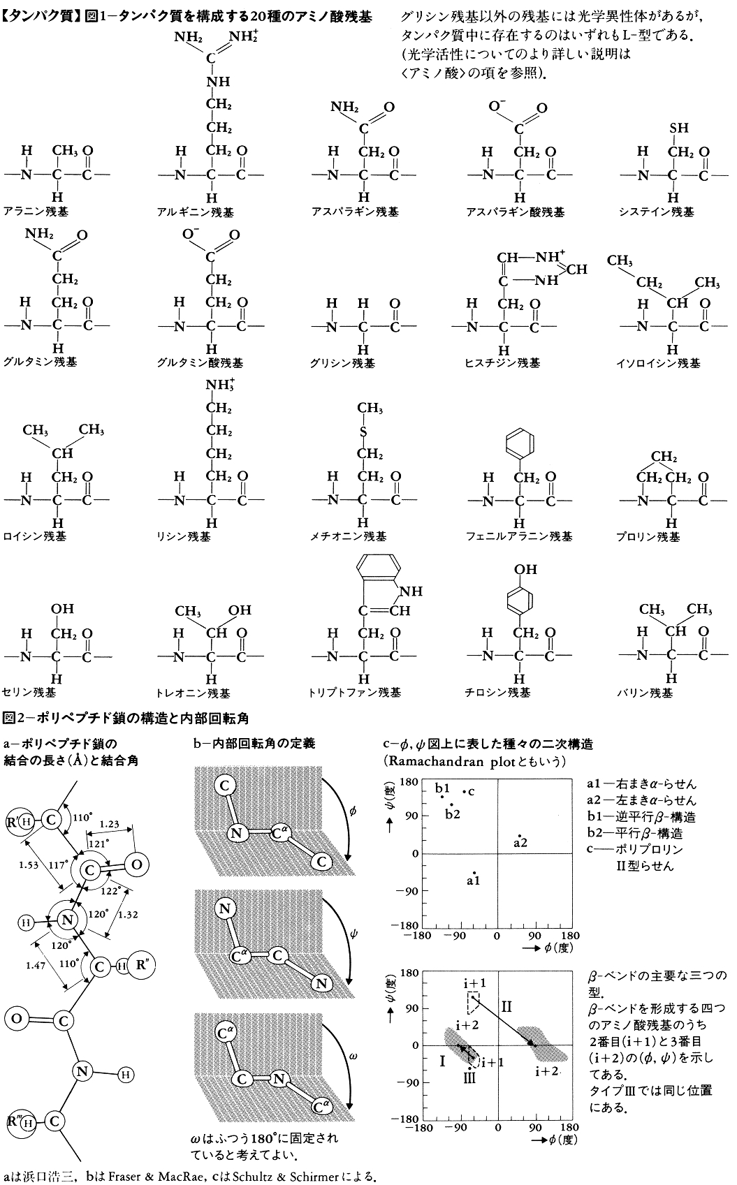 タンパク質 図1~図2