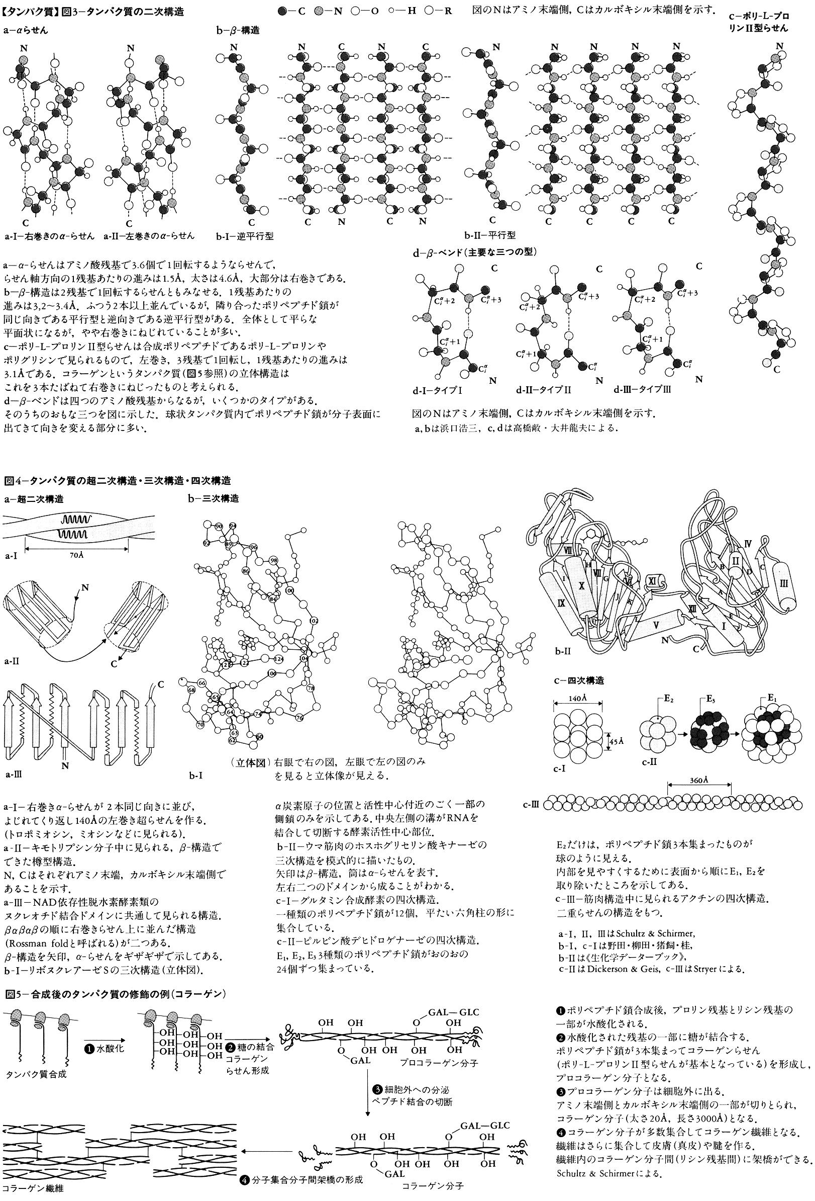 タンパク質 図3~図5